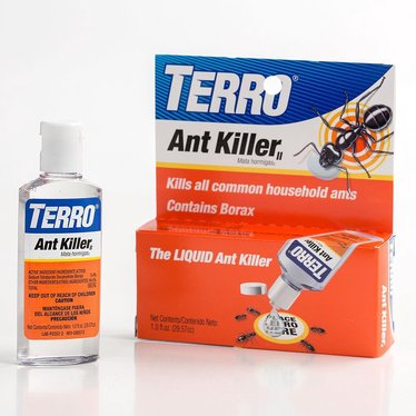 Terro Liquid Ant Killer