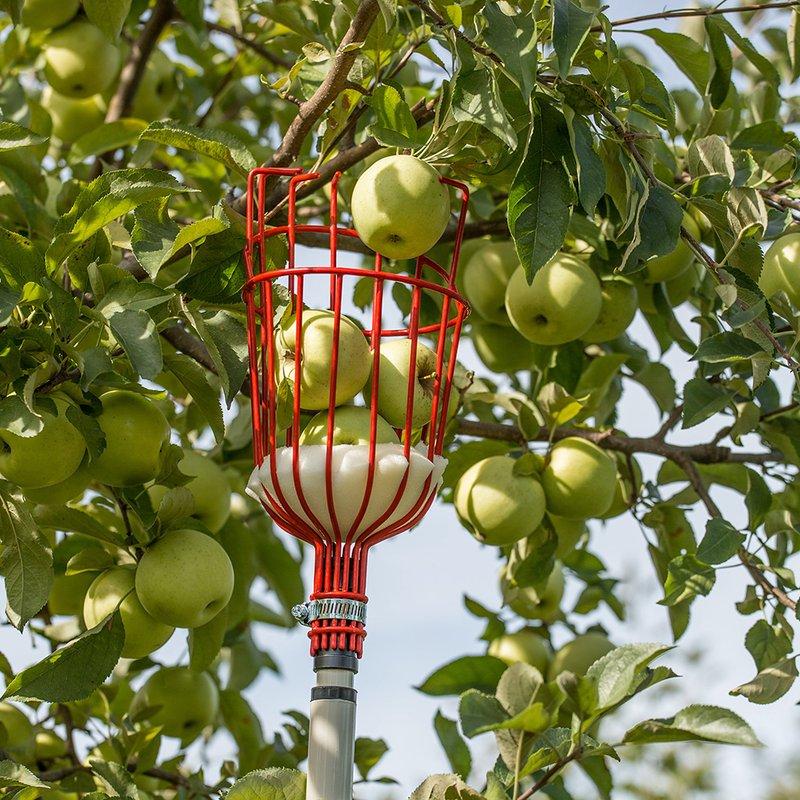 과일 수확기 도구, 확장 가능한 핸들 과일 피커    리먼