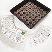 Culinary Herb Garden Kit