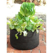 Reusable 5-Gallon Fabric Pot