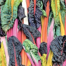 5 Color Silverbeet Swiss Chard Seeds