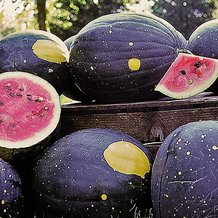 Moon and Stars Watermelon Seeds