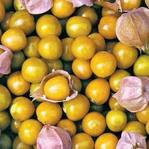Aunt Molly's Ground Cherry Seeds