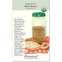 Sprouts Wheat Berries Organic Seeds