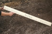 Wooden Planting Stick/Ruler