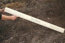 Wooden Planting Stick/Ruler