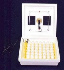 Low-Cost Chicken Egg Incubator