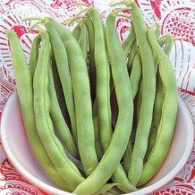 Kentucky Wonder Bush Bean Seeds