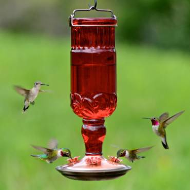 Hummingbird Red Vintage-Style Bottle Feeder 24 oz