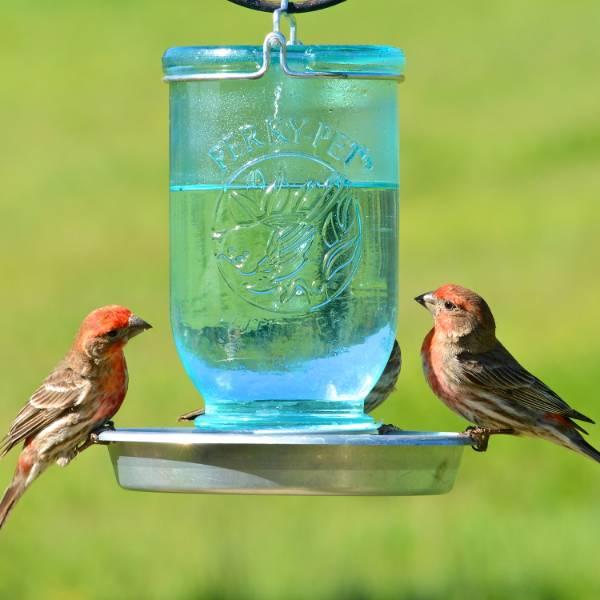 Mason Jar Wild Bird Waterer