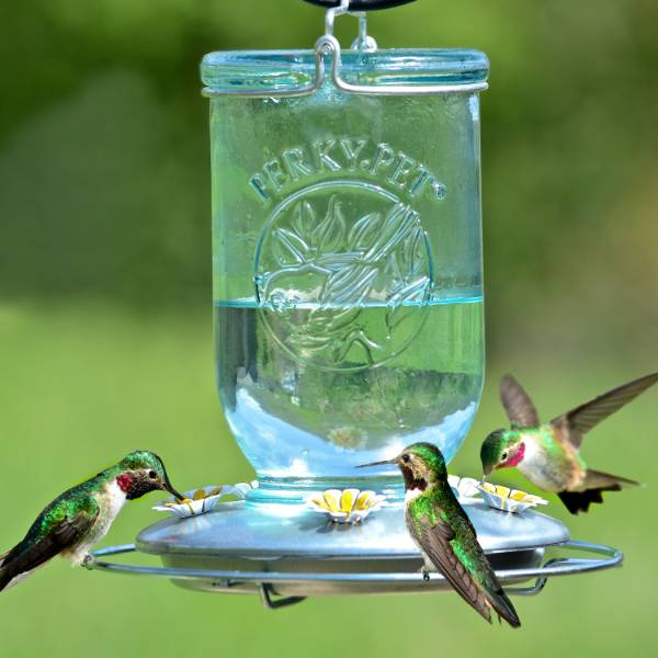 Blue Mason Jar Hummingbird Feeder