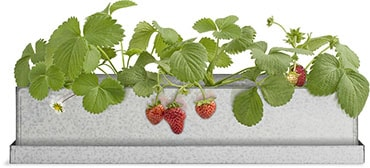 Strawberry Windowsill Grow Box