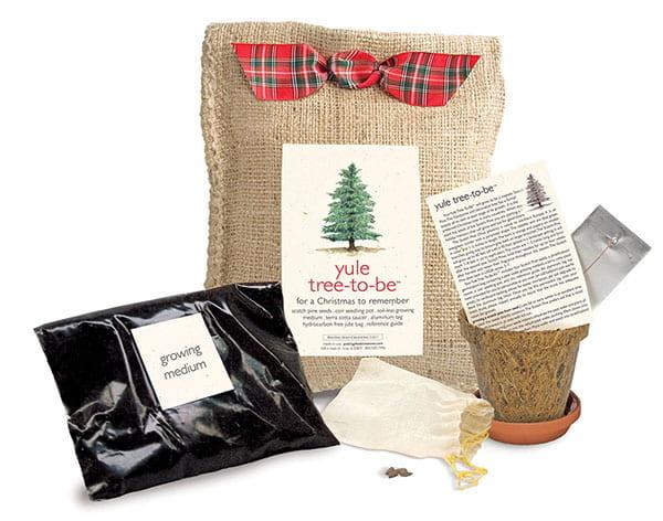 Yule Tree-to-Be Planting Kit
