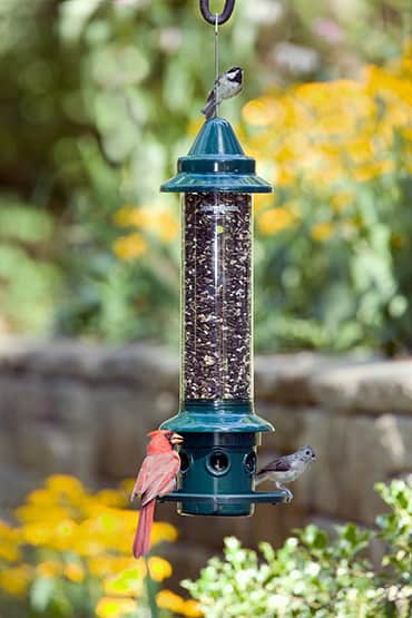 Squirrel Buster Plus Birdfeeder