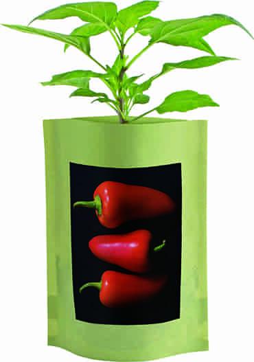 Sweet Pepper Seed Starts