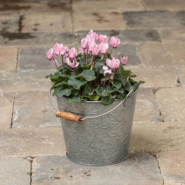 Galvanized floral bucket planters lehman 39 s for Large galvanized buckets for flowers