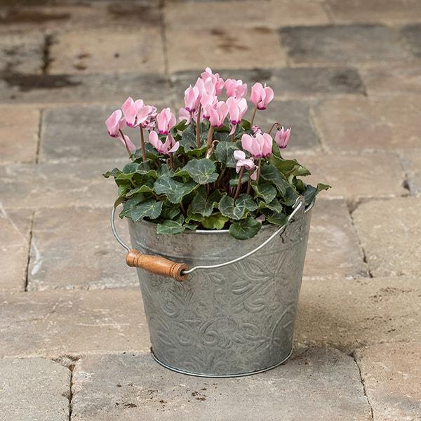 Galvanized Floral Bucket Planters