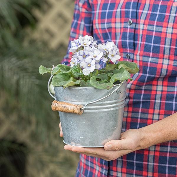 Galvanized Striped Bucket Planters