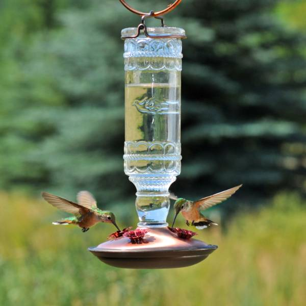 Hummingbird Clear Vintage-Style Bottle Feeder 10 oz