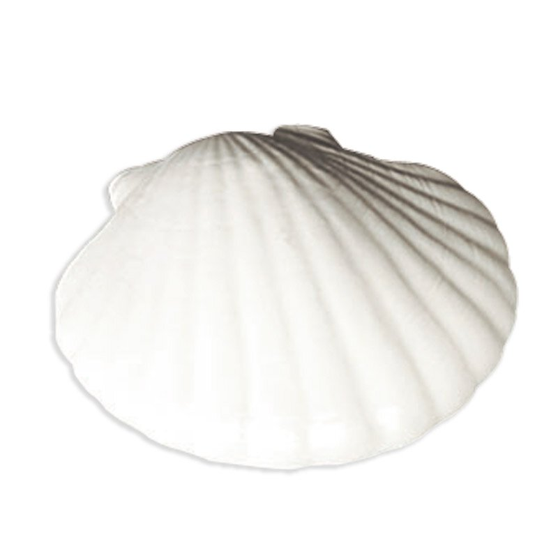 Baptismal Shell