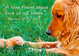 Friendship Card-Pr 17:17