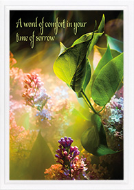 Sympathy Greeting Cards | Jehovah's Witnesses Supplies | Madzay com