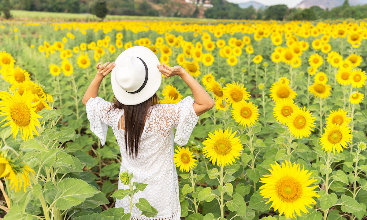 Sunflower farm bans tourists forever due to people taking ...