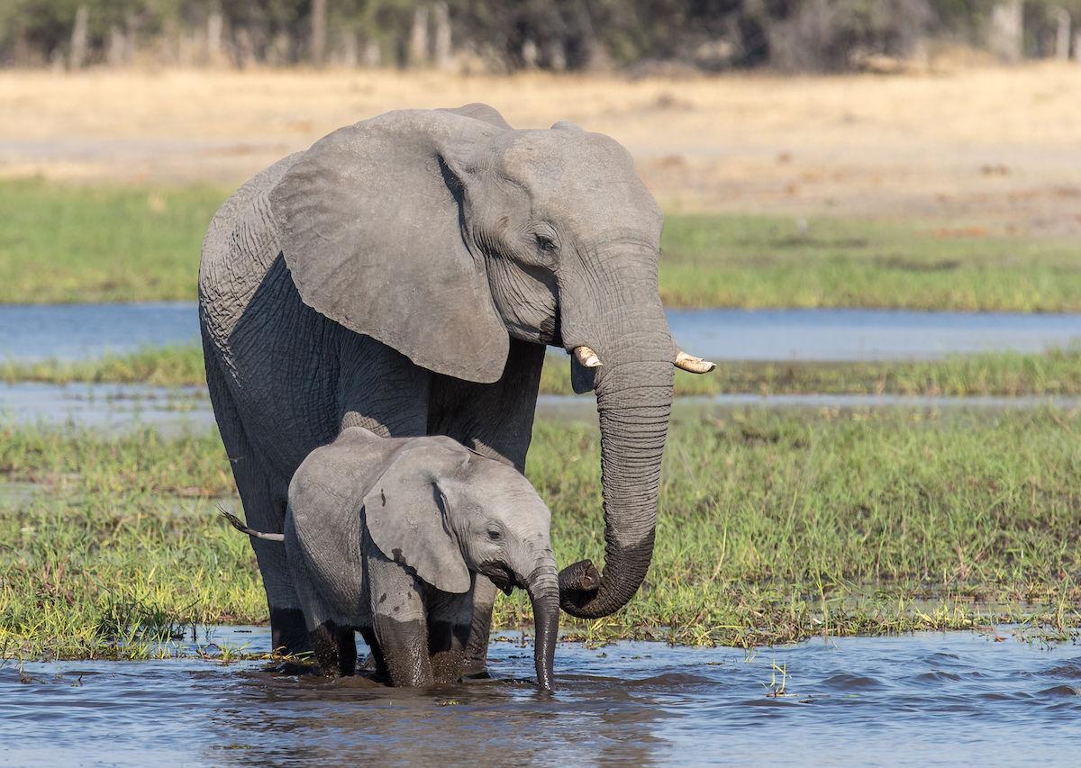 Celebrate World Elephant Day by not riding an elephant