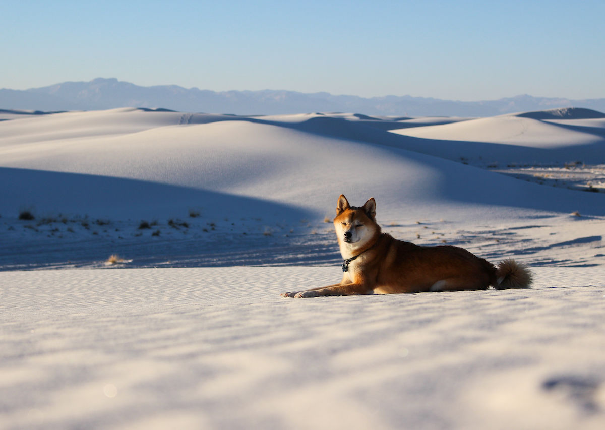 Visiting White Sands National Monument With Your Dog