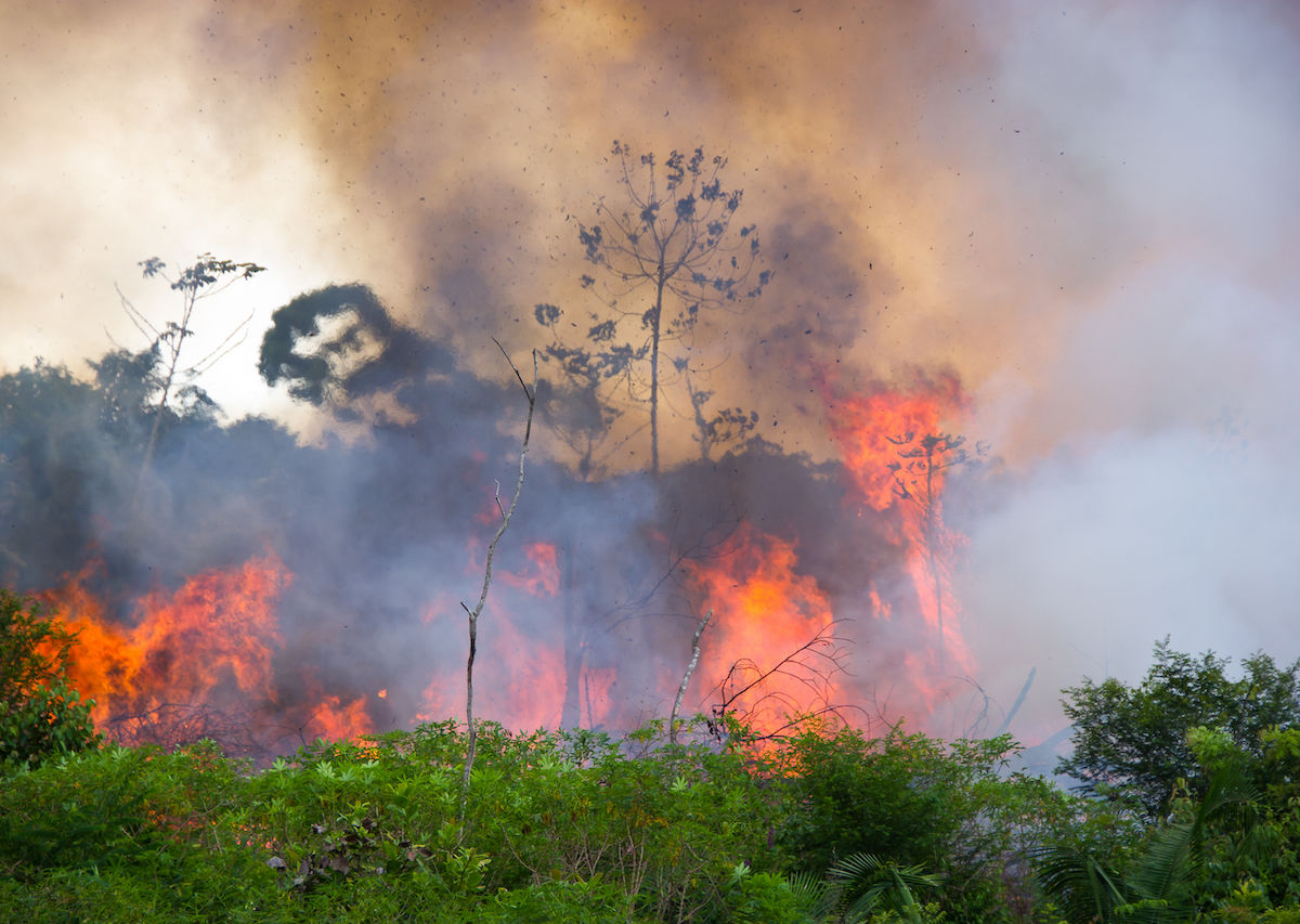 The Amazon rainforest, our defense against climate change, has been on fire for weeks