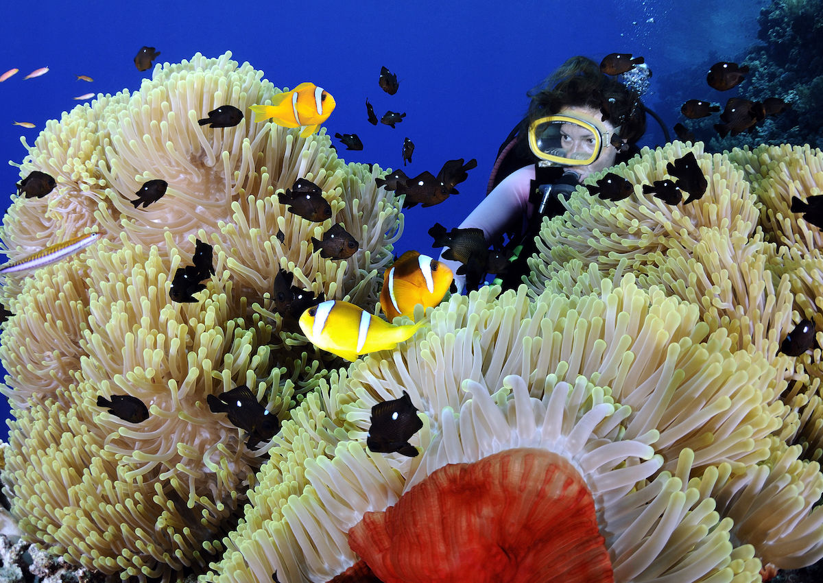 The best diving in Egypt's Red Sea
