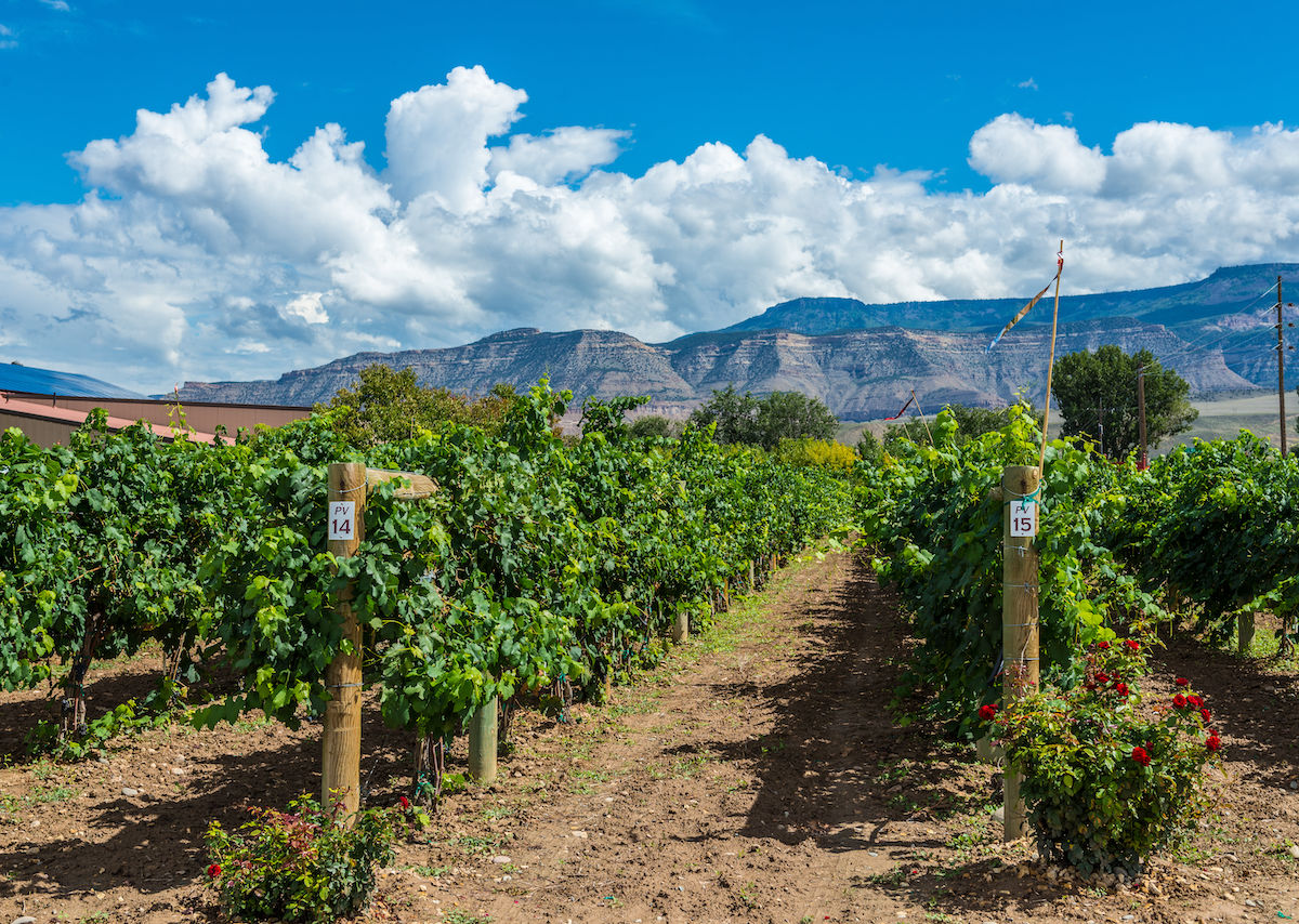 How to bike the Fruit and Wine Byway