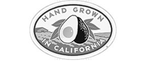 CA Avocado