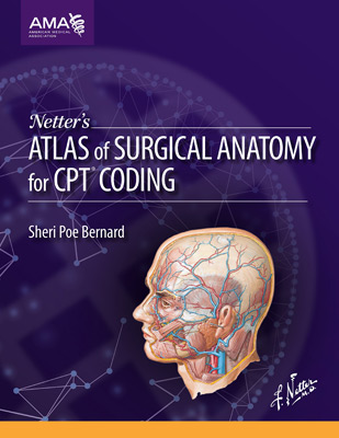 Netters Atlas Of Surgical Anatomy For Cpt Coding