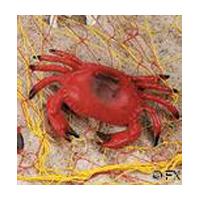 Crab Decoration, 8-1/2 in.