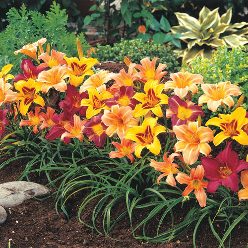 Breeder's Choice Daylily Super Bag