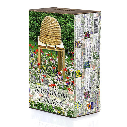Naturalizing Box Collection
