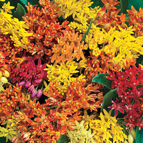 Native Butterfly Plant Mix