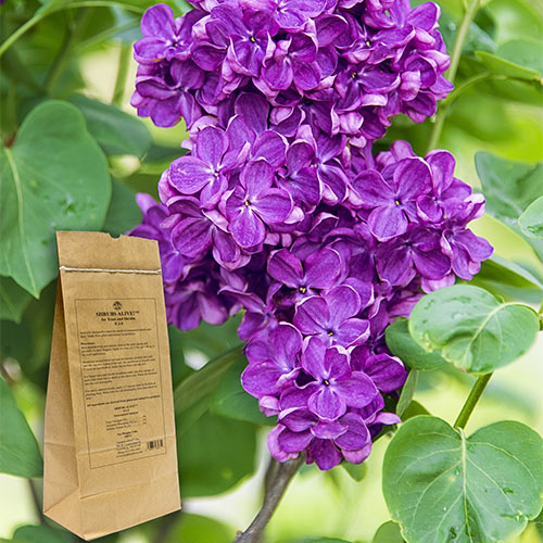 Shrubs Alive!™ For Trees And Shrubs 5 Lbs