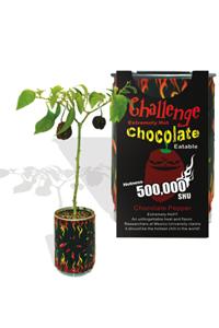 Challenge Chocolate Habanero Pepper Chili Plant