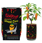 Challenge Peach Ghost Chili Plant