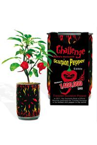 Challenge Scorpion Pepper Magic Plant