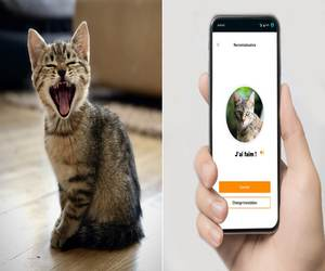 MeowTalk .. تطبيق لترجمة مواء القطط