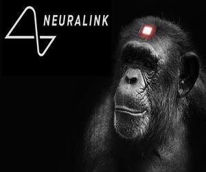 Neuralink حفزت دماغ قرد للعب ألعاب الفيديو بعقله