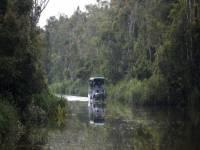 تحديد سعر للغابات المطيرة