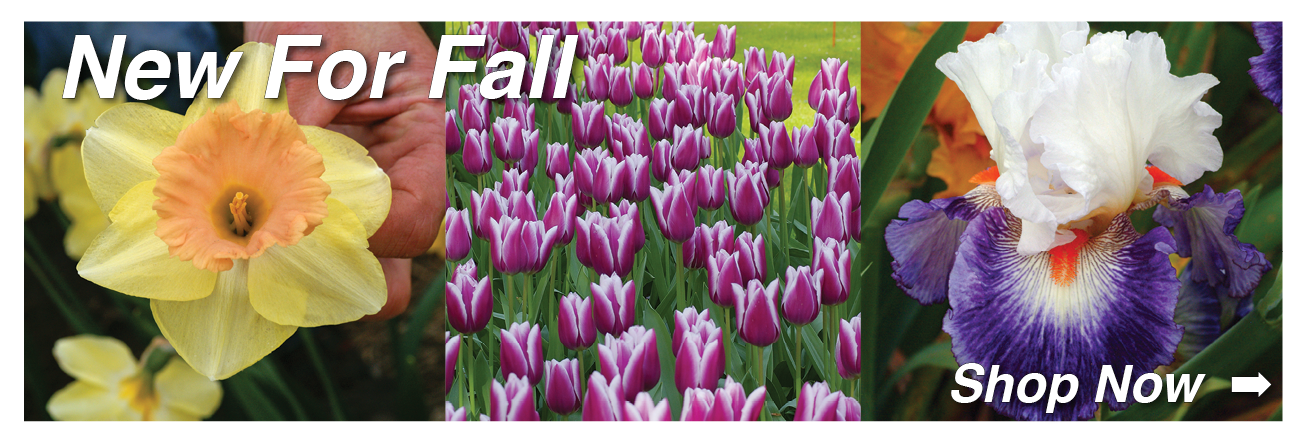 Fall Shipped Bulbs