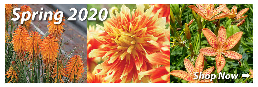 2020 Spring Bulbs