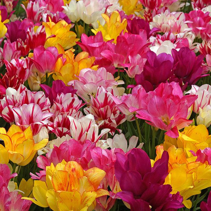 Delightful Bouquet Blend