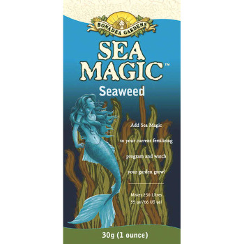 Sea Magic