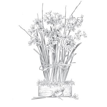 Ziva Paperwhite Daffodil